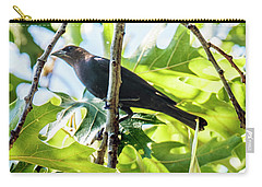 Male Brown-headed Cowbird Carry-all Pouch