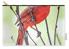 Male Cardinal Perched On Budding Stem Carry-all Pouch