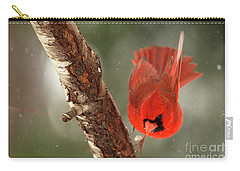 Carry-all Pouch featuring the photograph Male Cardinal Take Off by Darren Fisher