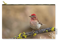 Male Cassins Finch Carry-all Pouch