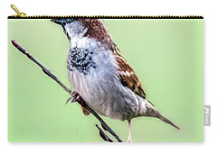 Male House Sparrow Profile Carry-all Pouch