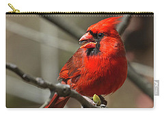 Male Northern Cardinal In Spring Carry-all Pouch