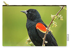 Carry-all Pouch featuring the photograph Male Red-winged Blackbird by Belinda Greb