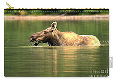 Carry-all Pouch featuring the photograph Many Glacier Moose 1 by Adam Jewell