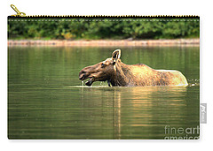Carry-all Pouch featuring the photograph Many Glacier Moose 2 by Adam Jewell