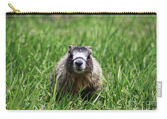 Marmot Pup Carry-all Pouch by Alyce Taylor