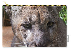 Micanopy Carry-all Pouch
