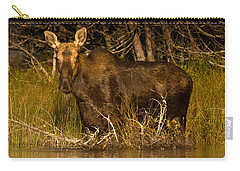 Moose Of Prong Pond Carry-all Pouch by Brent L Ander