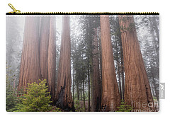 Carry-all Pouch featuring the photograph Morning Light In The Forest by Peggy Hughes