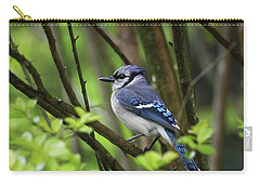 Northern Blue Jay Carry-all Pouch