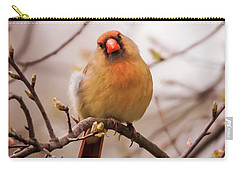 Northern Female Cardinal Pose Carry-all Pouch by Terry DeLuco