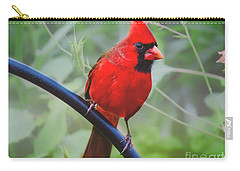 Northern Male Red Cardinal Bird Carry-all Pouch