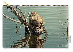Nutria On Stick-up Carry-all Pouch by Robert Frederick