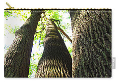 Oldgrowth Tulip Tree Carry-all Pouch