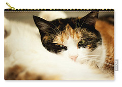 Carry-all Pouch featuring the photograph On A Furry Pillow by Laura Melis