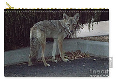 Carry-all Pouch featuring the photograph On The Prowl 1 by Anne Rodkin