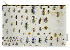 One Hundred And Fifty Insects, Dominated At The Top By A Large Dragonfly Carry-all Pouch