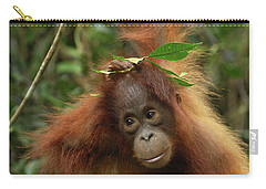 Orangutan Pongo Pygmaeus Baby, Camp Carry-all Pouch by Thomas Marent