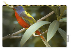 Painted Bunting Male Carry-all Pouch by Phill Doherty