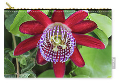 Passiflora Ruby Glow. Passion Flower Carry-all Pouch