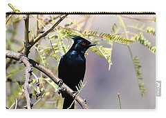 Phainopepla Black Cardinal Carry-all Pouch