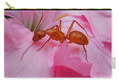 Pharaoh Ant Carry-all Pouch