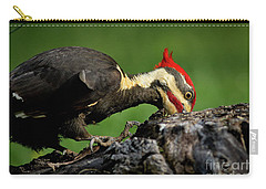 Carry-all Pouch featuring the photograph Pileated 3 by Douglas Stucky