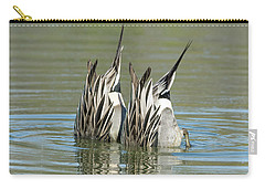 Carry-all Pouch featuring the photograph Pintail Ducks Dive by Tam Ryan