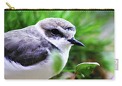 Carry-all Pouch featuring the photograph Piping Plover by Anthony Jones