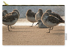 Plovers In The Morning Sunlight Carry-all Pouch