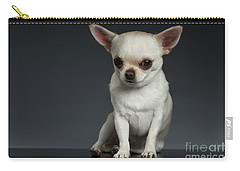Portrait Little Chihuahua Dog Sitting On Dark Backgroun Carry-all Pouch by Sergey Taran