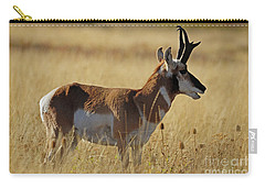 Pronghorn Antelope Carry-all Pouch by Cindy Murphy - NightVisions