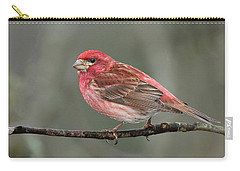 Purble Finch Carry-all Pouch by Alan Lenk
