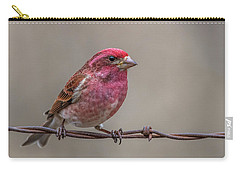 Carry-all Pouch featuring the photograph Purple Finch On Barbwire by Paul Freidlund