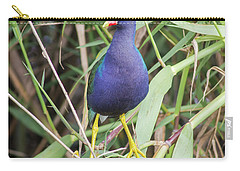 Purple Gallinule Carry-all Pouch by Robert Frederick