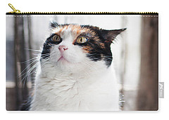 Carry-all Pouch featuring the photograph Puzzled by Laura Melis