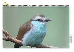 Racket-tailed Roller V2 Carry-all Pouch
