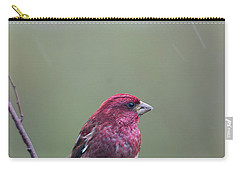Carry-all Pouch featuring the photograph Rainy Day Finch by Susan Capuano