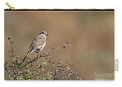 Red-backed Shrike Juv. - Lanius Collurio Carry-all Pouch by Jivko Nakev