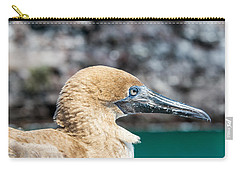 Red Footed Booby Juvenile Carry-all Pouch by Jess Kraft