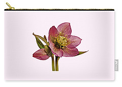 Red Hellebore Transparent Background Carry-all Pouch