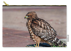 Red-shouldered Hawk Carry-all Pouch by Martina Thompson