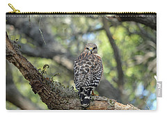 Red Shouldered Hawk Turning Head 180 Carry-all Pouch