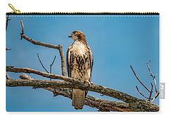 Red Tail Hawk Perched Carry-all Pouch