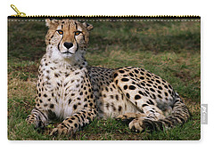 Regal Pose Carry-all Pouch