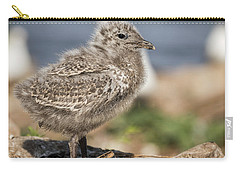 Ring-billed Gull Chick 2016-1 Carry-all Pouch by Thomas Young
