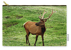 Carry-all Pouch featuring the photograph Rocky Mountain Elk 3 by Marie Leslie
