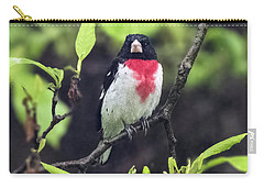 Rose-breasted Grosbeak On Tree Branch Carry-all Pouch