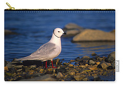 Ross's Gull Carry-all Pouch