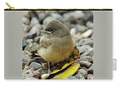Say's Phoebe Fledgling Carry-all Pouch